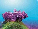 Alga Coral -Lithothamnium calcareum