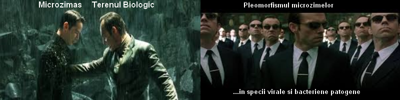 Matrix - Pleomorfism